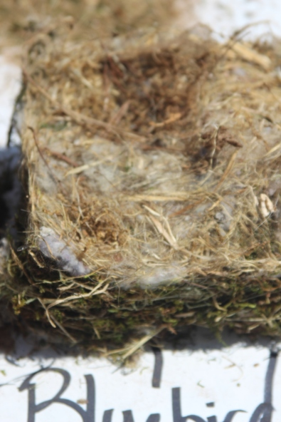 Bluebird nest: loose with an indentation in the middle