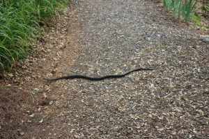 Mr. Snake