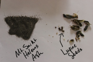 Ashes and Lupine Seeds