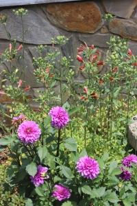 Dahlias and Alstroemeria/Peruvian lily