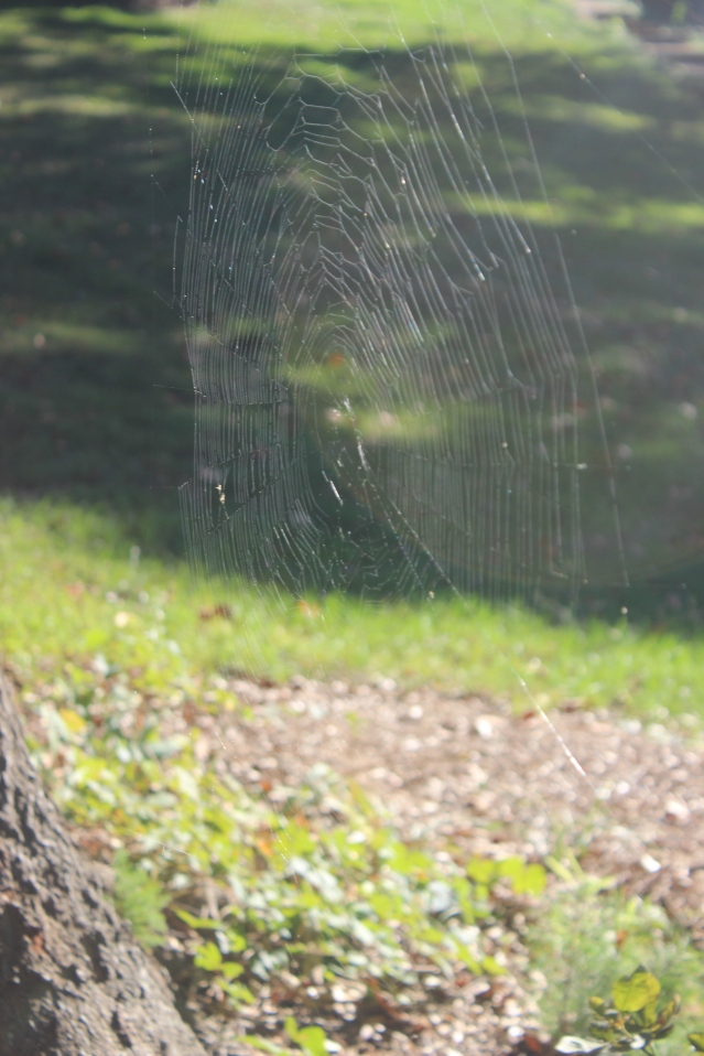 Shining spider web