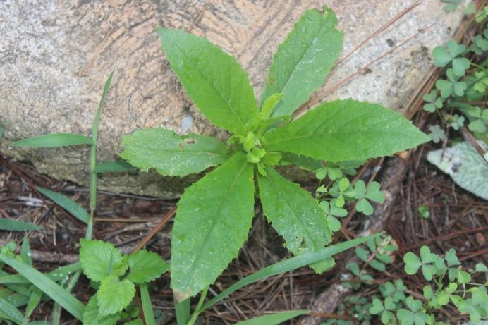 Weeds 002