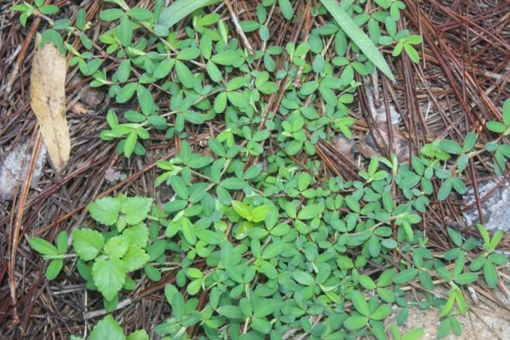 Weeds 003