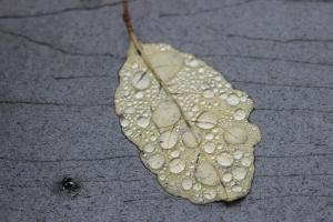 Raindrop mosaic