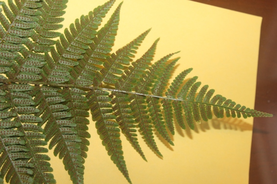triangular shaped frond