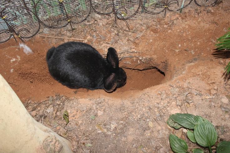 Charlotte digging 010