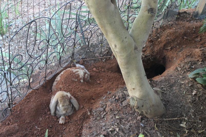 Charlotte digging 021