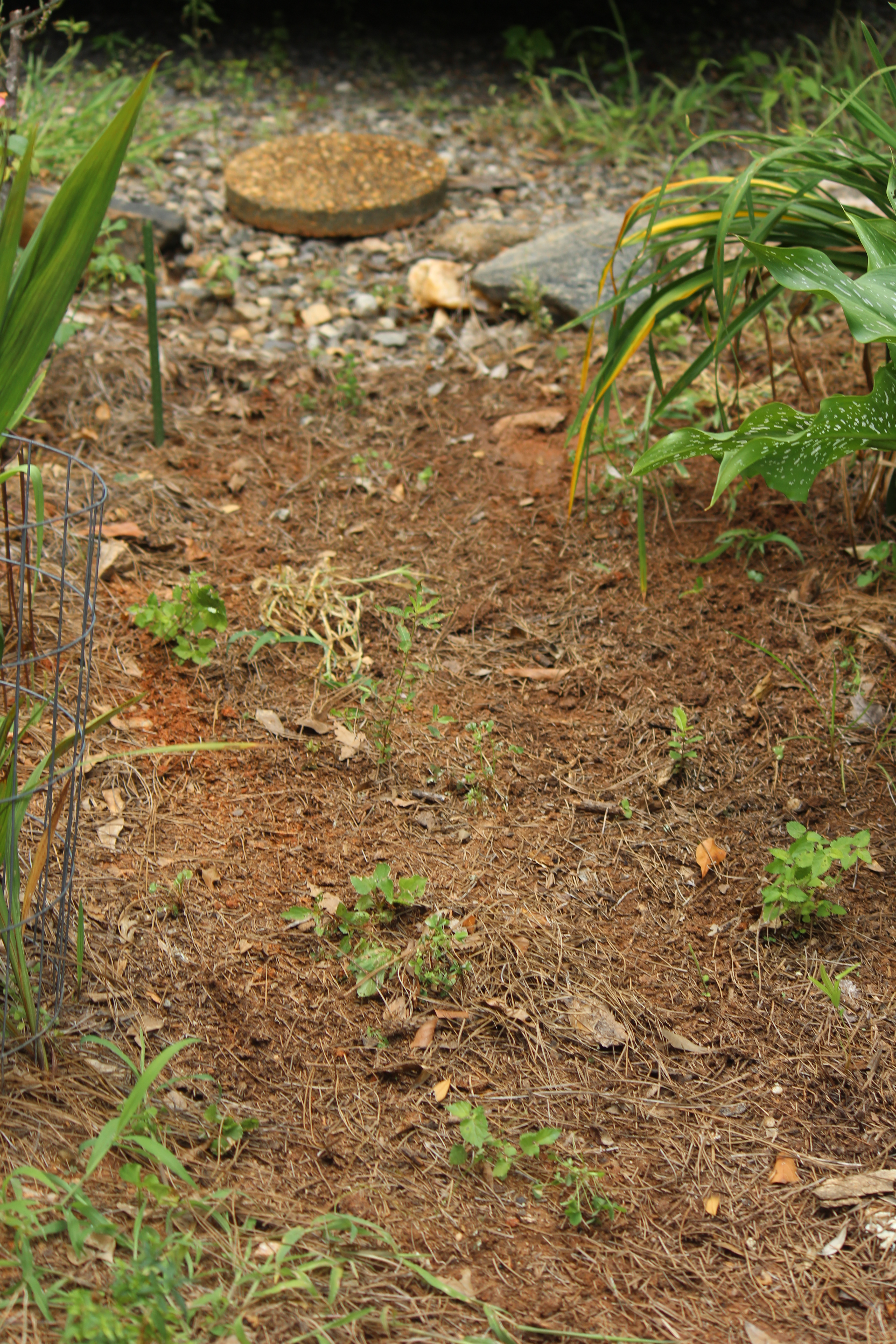 stepping i landscaping gardening flower pinterest and stone landscapingdecorative ornamental stones co of types satuska decor uk garden beds decorative mulch