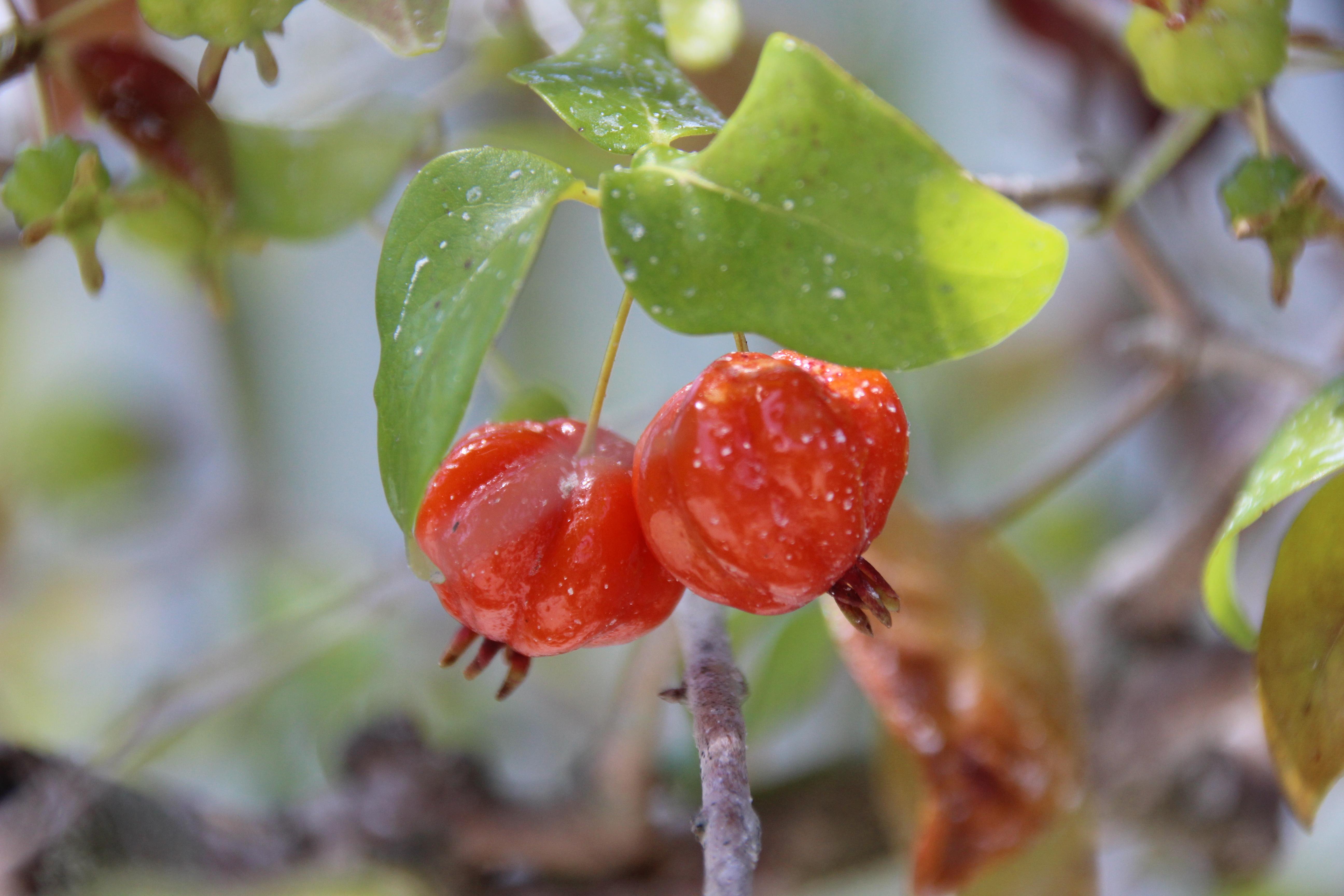 floweralley – Flora and fauna in a North Carolina garden.