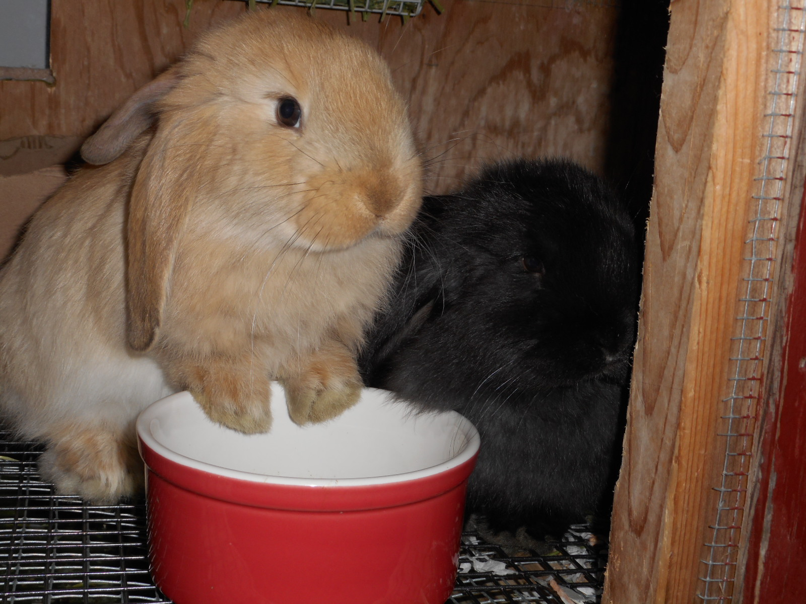 Bunnies again 013